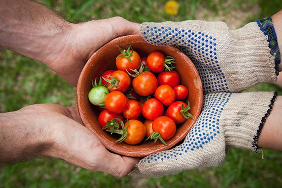 Farm to Food Program