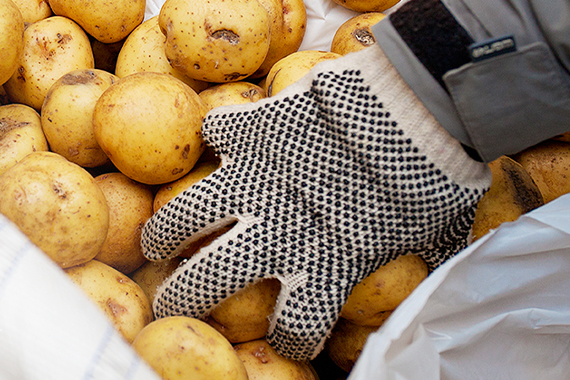 The Purpose of our Plentiful Harvest Food Rescue Program